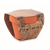 Terracotta pot 'forget me not'