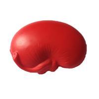 Stress - Kidney