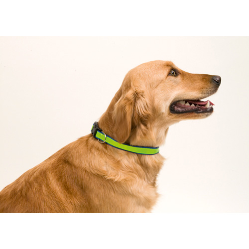 Reflective Pet Collar Muttley in blue